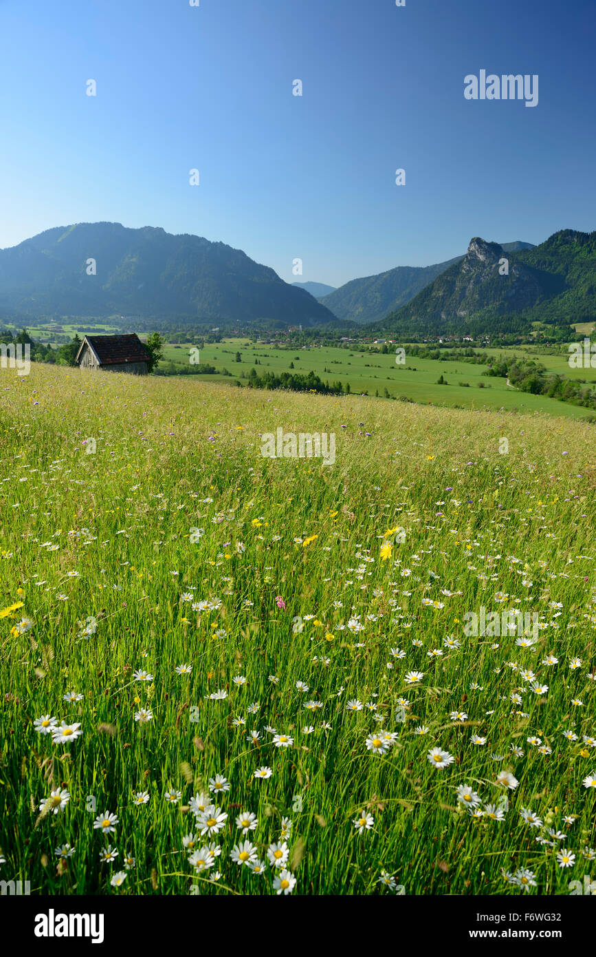 Flowering meadow and haystack above valley of Oberammergau, Laber and Kofel in background, Oberammergau, Ammergau Stock Photo