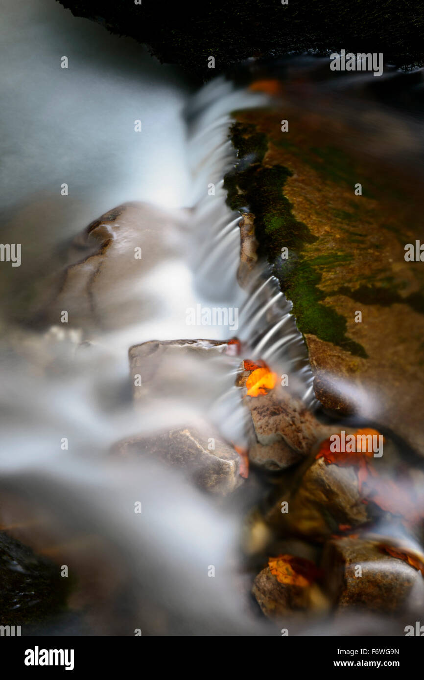 Autumn leaves on wet boulders in stream, with motion blur, Haute Savoie, France. - Stock Image