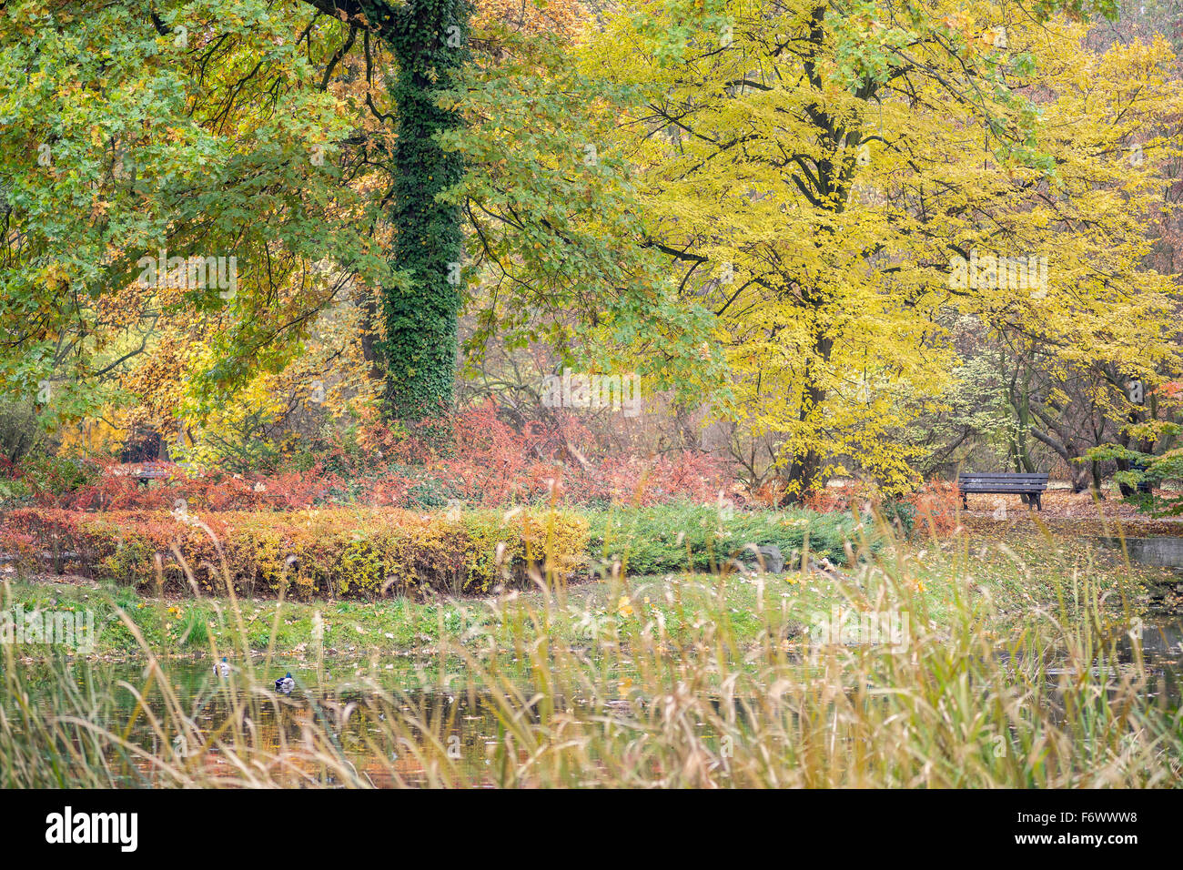 Multicolor autumn fall foliage on the trees and bushes - Stock Image