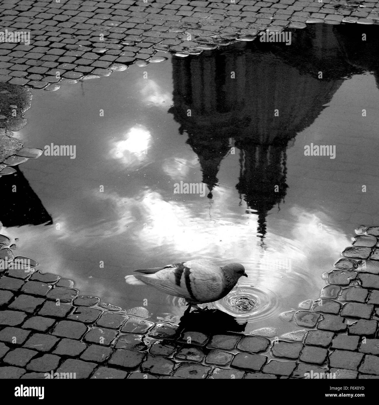 Piazza Navona Puddles - Stock Image