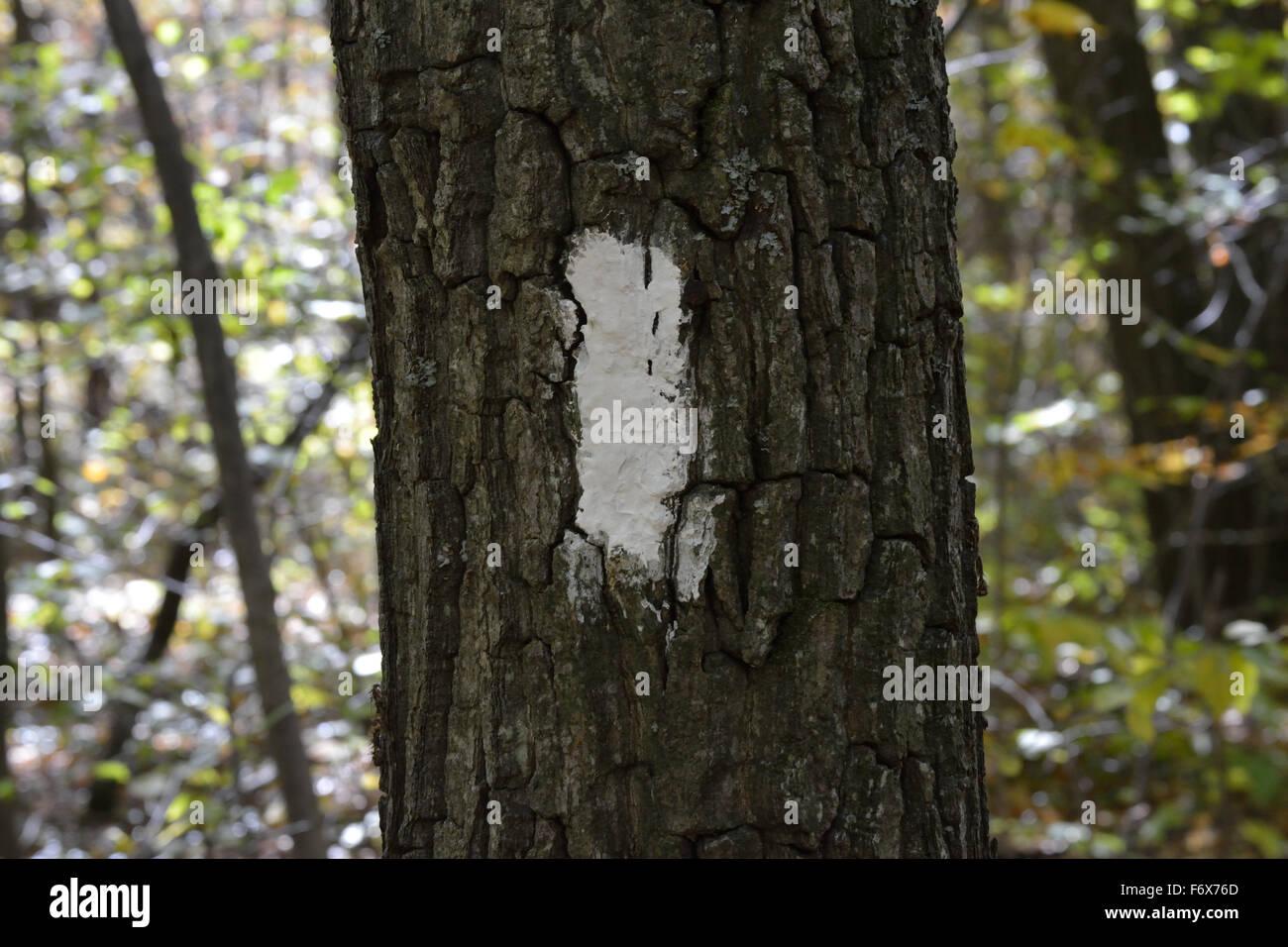 Blazing Trails - Stock Image