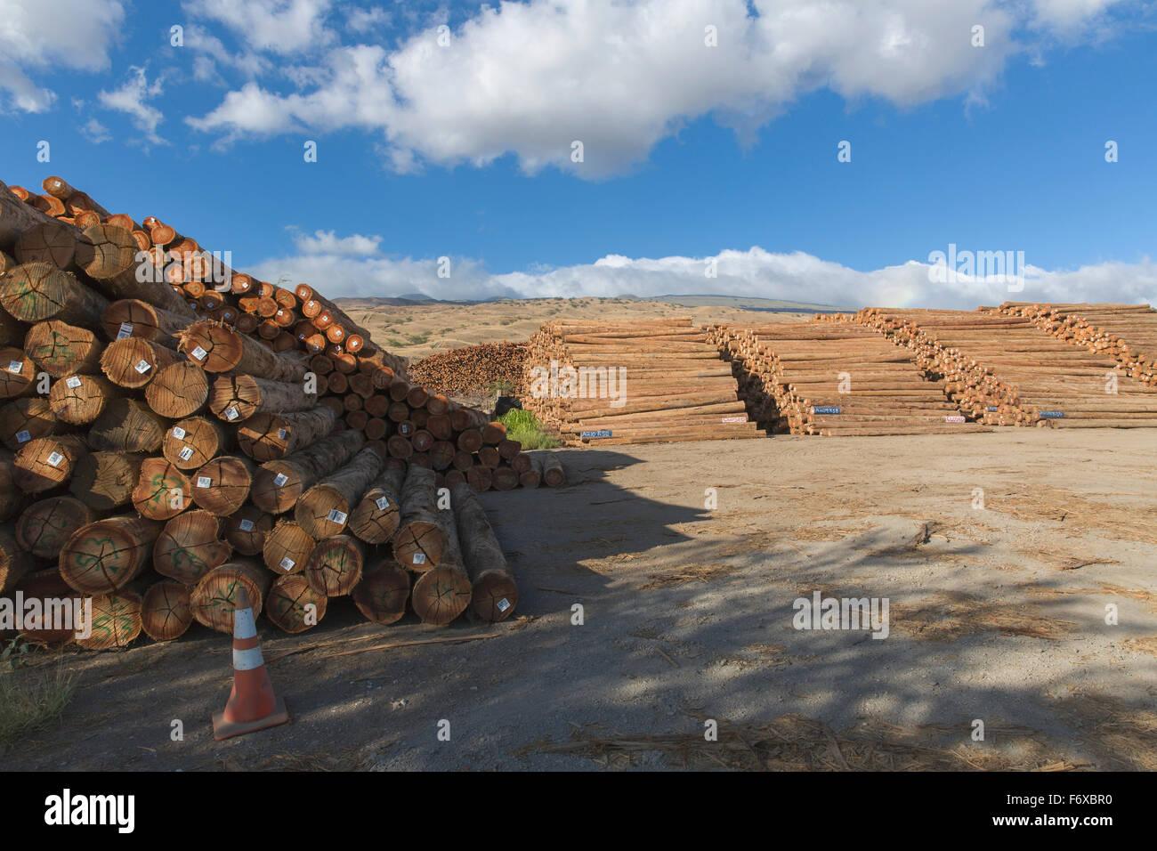 Eucalyptus (Eucalyptus regnans) logs near harbor and ready for shipping to Japan from Kawaihae Harbor in Kohala - Stock Image