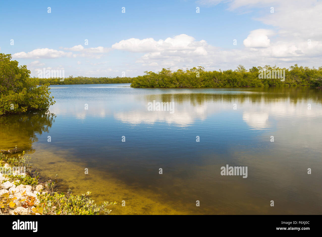 Lake in the Ding Darling National Wildlife Refuge, Sanibel Iceland, Florida, USA - Stock Image
