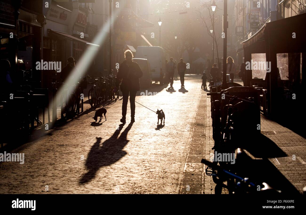Woman walking two small dogs Exmouth Market - Stock Image