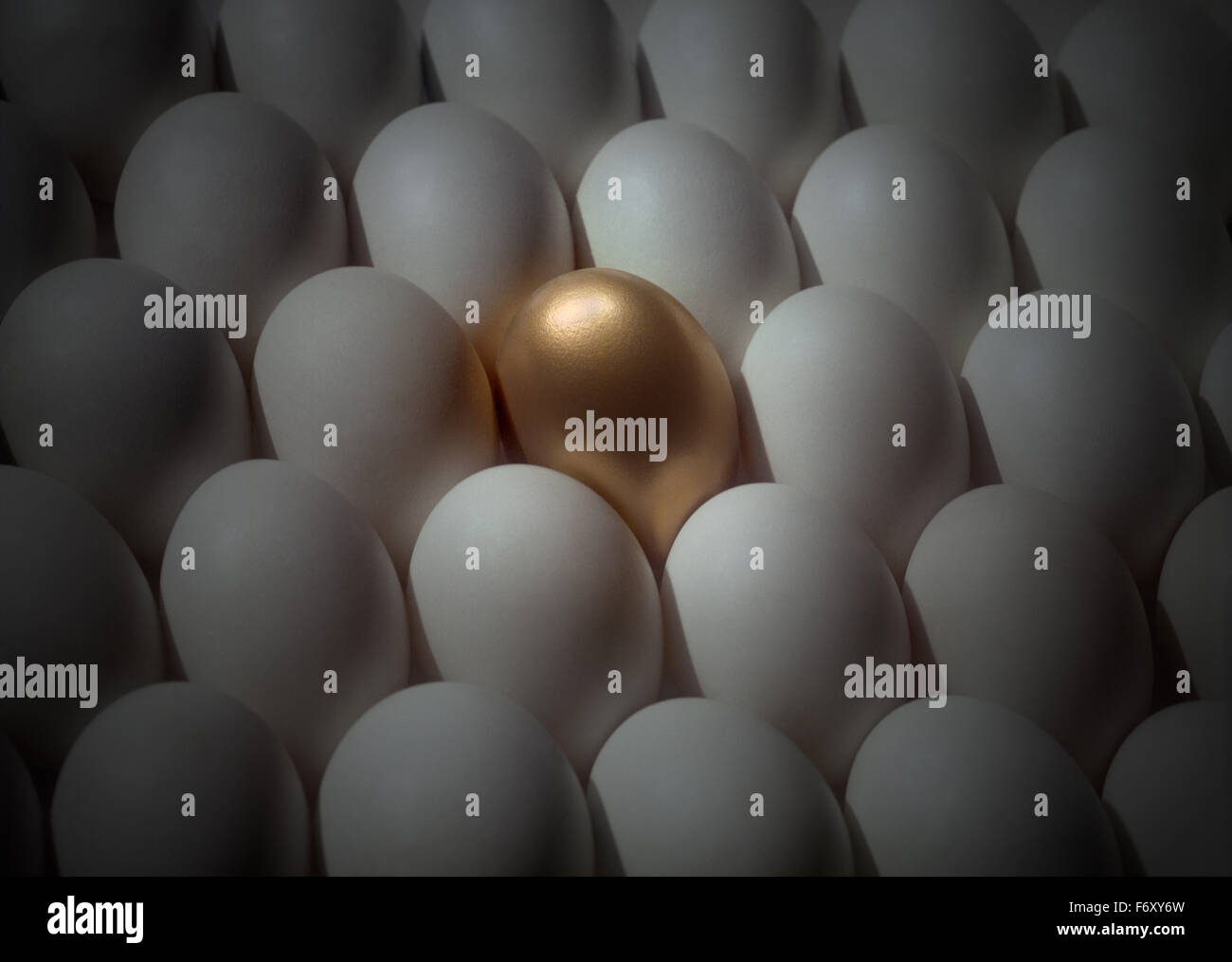 Gold egg among white eggs as the unique and individual odd one out - Stock Image