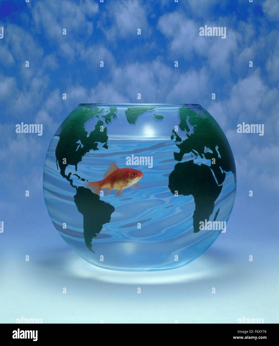Goldfish in clear water in a bowl decorated with world map for global warming and pollution - Stock Image