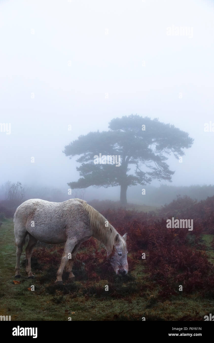 a pony grazing in the morning mist - Stock Image