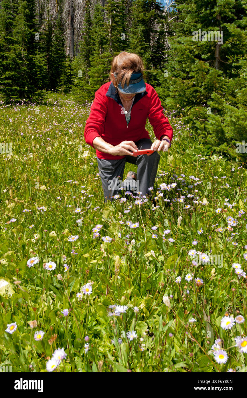 Woman in the Payette National Forest, Idaho, photographing wildflowers with her cellphone (MR) - Stock Image
