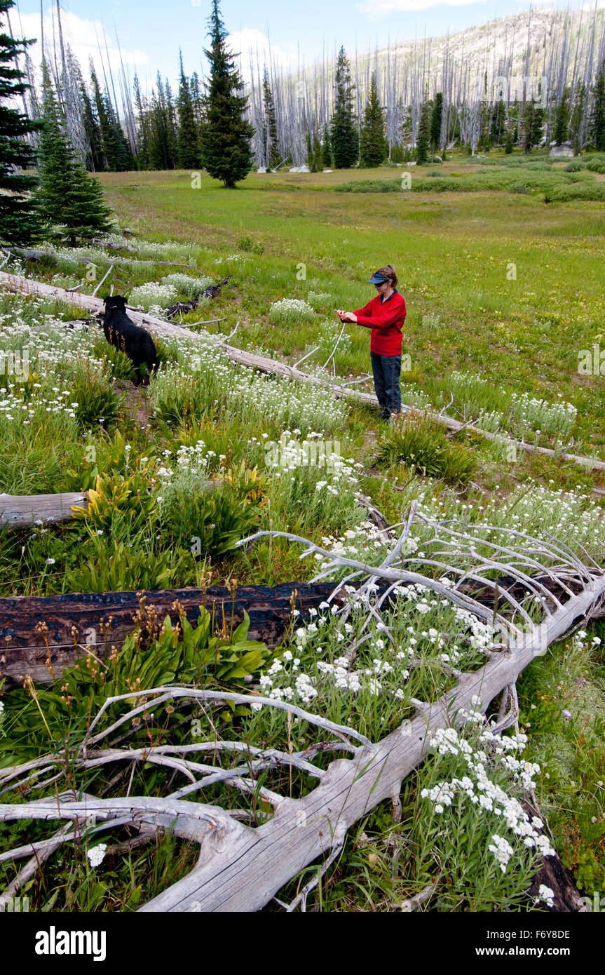 Woman and dog on trail in the Payette National Forest, Idaho, photographing wildflowers with her cellphone  (MR - Stock Image