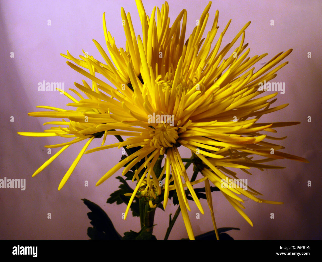 Yellow flowers flowersisolated flowersspikythree flowers stock yellow flowers flowersisolated flowersspikythree flowers mightylinksfo Gallery