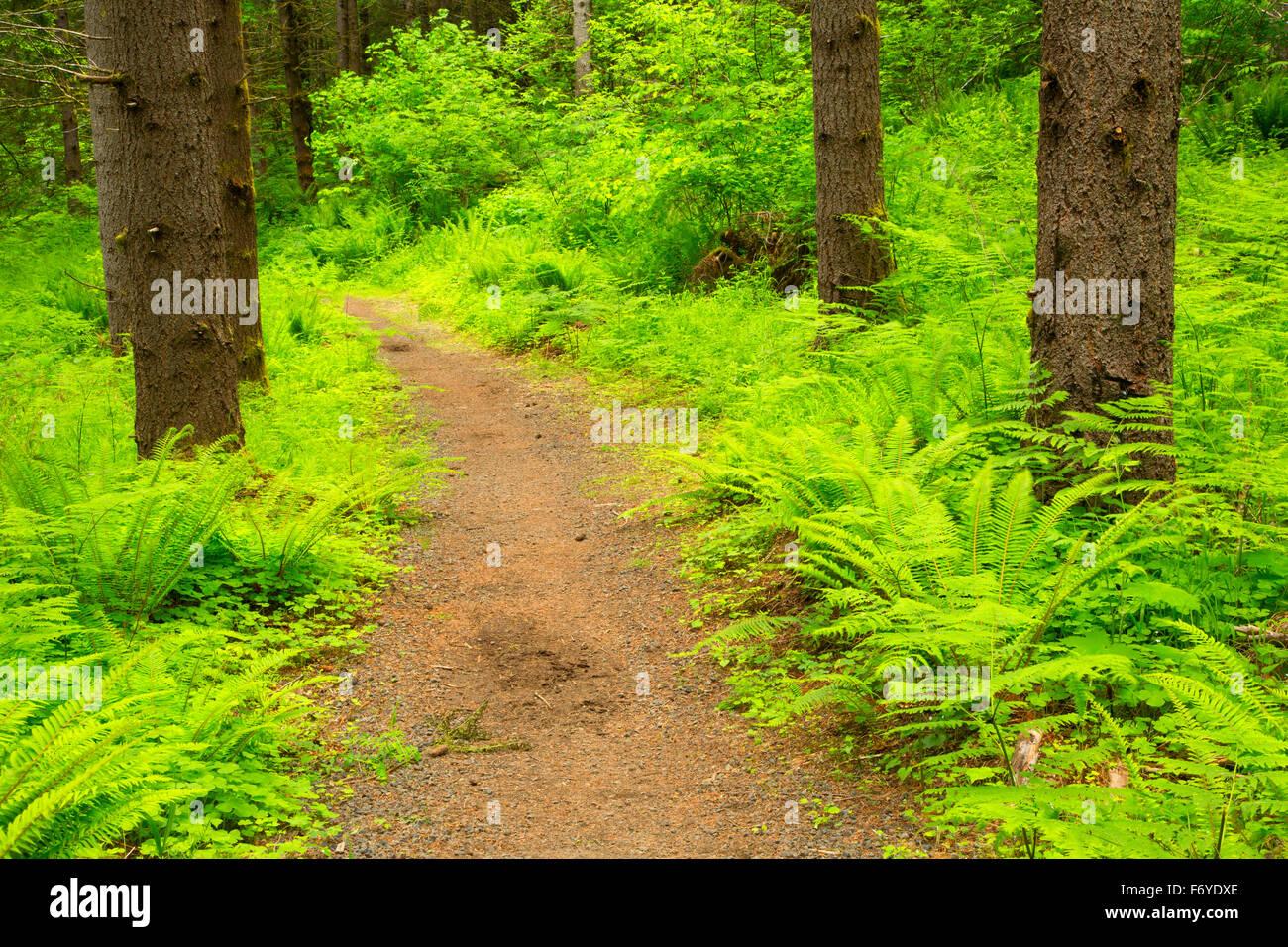 Hares Canyon Trail, Stub Stewart State Park, Oregon - Stock Image