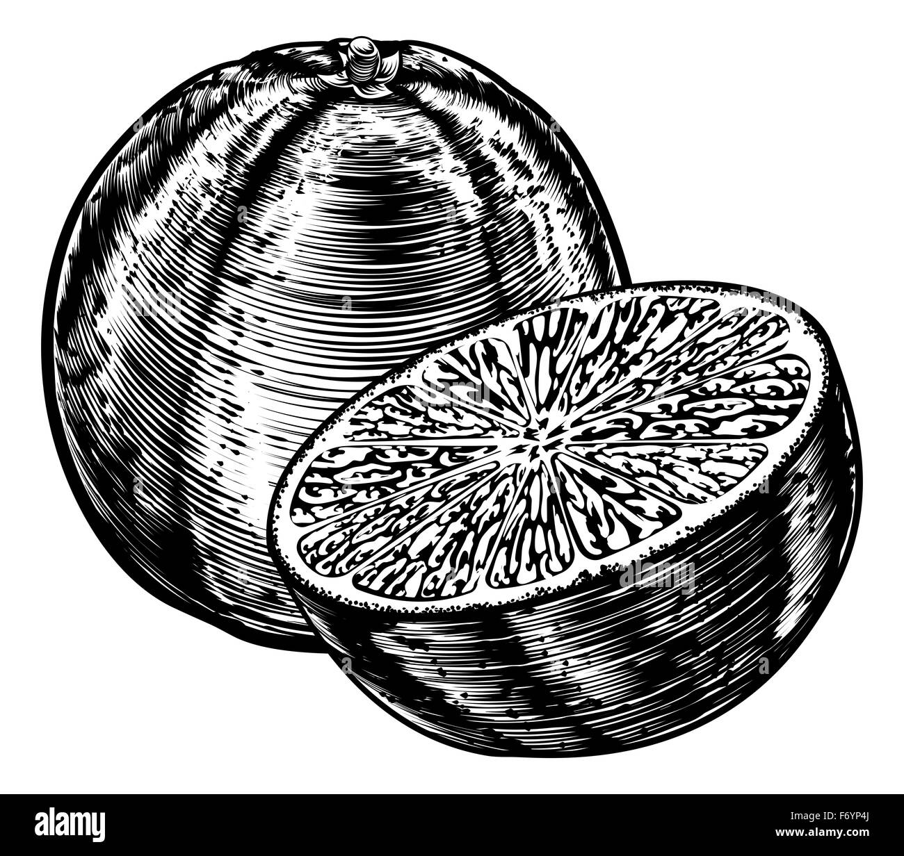 An original illustration of a sliced orange fruit in a vintage woodcut or woodblock style - Stock Image