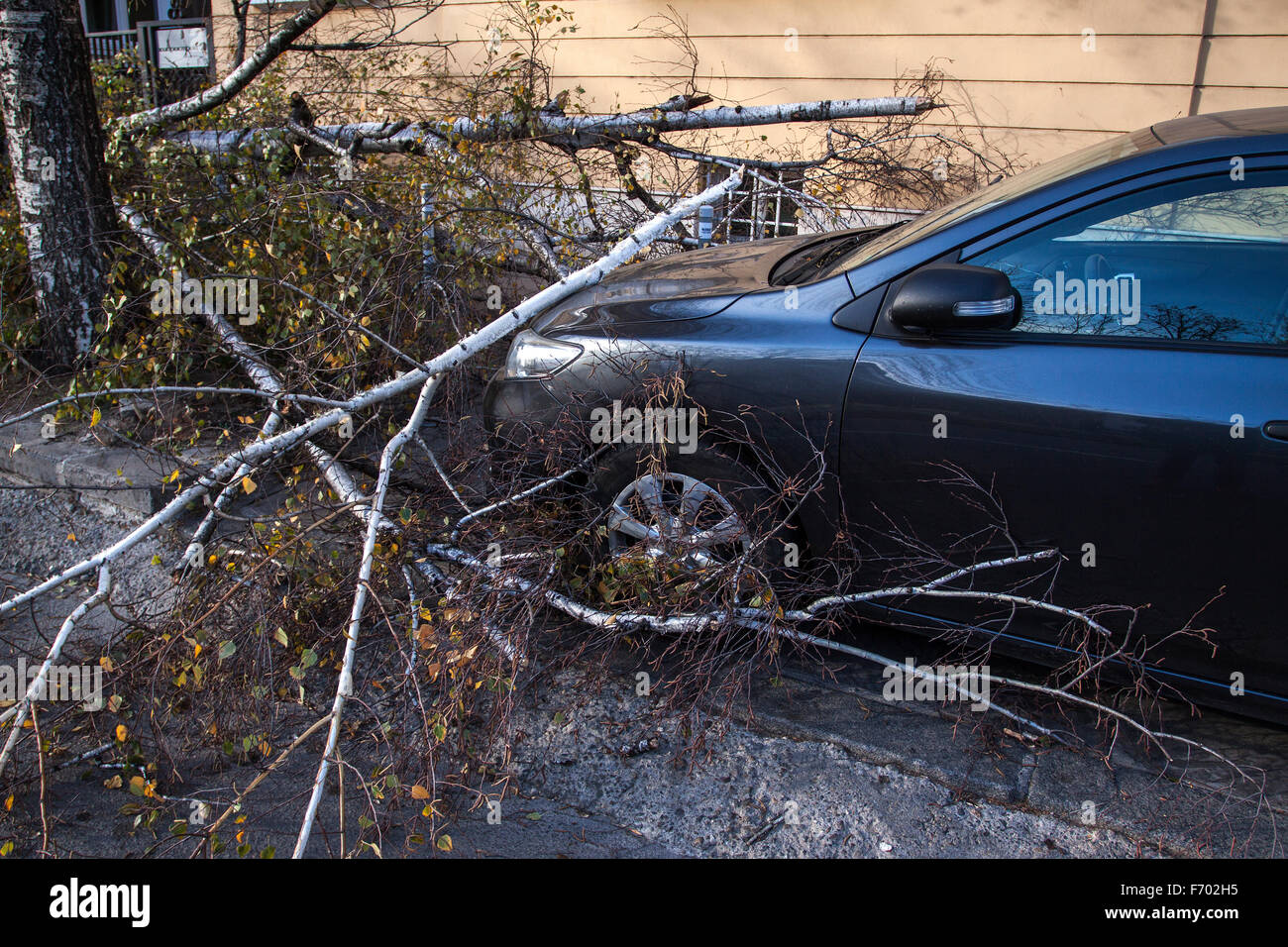 Sofia, Bulgaria - November 22, 2015: Car trapped under fallen tree after wind storm on November 22, 2015 in Sofia, Stock Photo