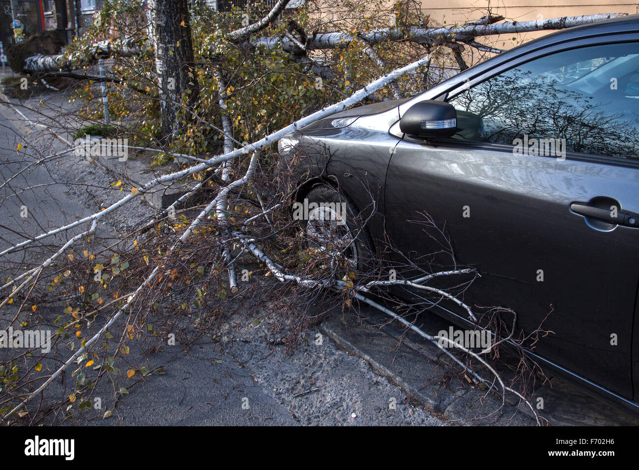 Sofia, Bulgaria - November 22, 2015: Car trapped under fallen tree after wind storm on November 22, 2015 in Sofia, - Stock Image