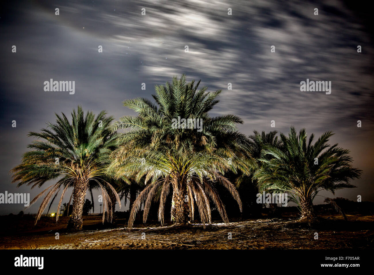 Date Grove at night - Stock Image
