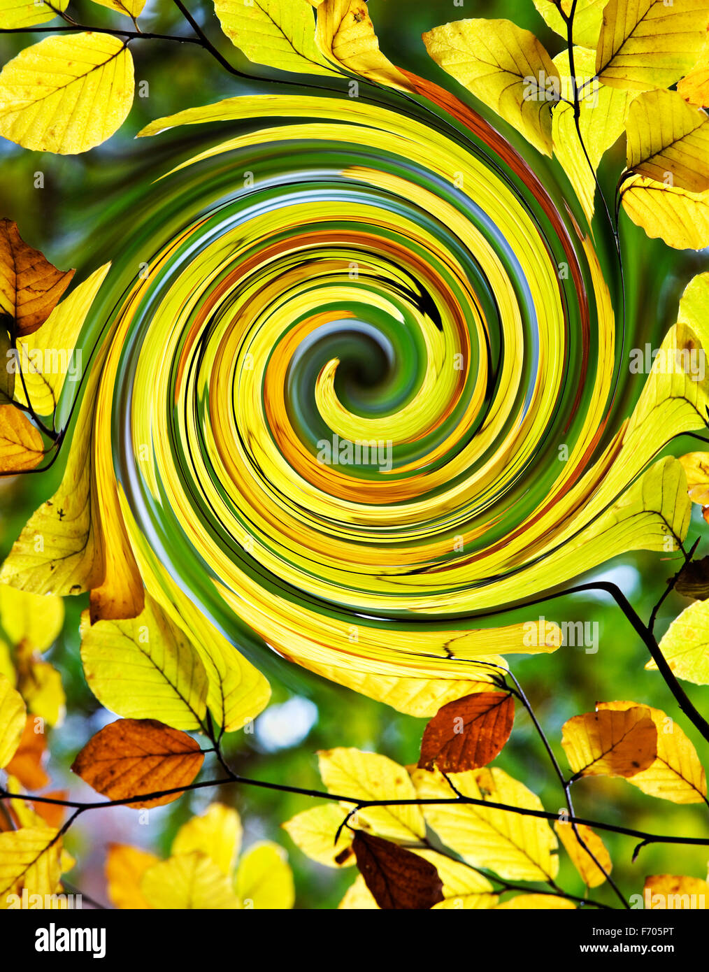 Fagus sylvatica - Swirling Beech leaves -  Abstract Autumn - Stock Image