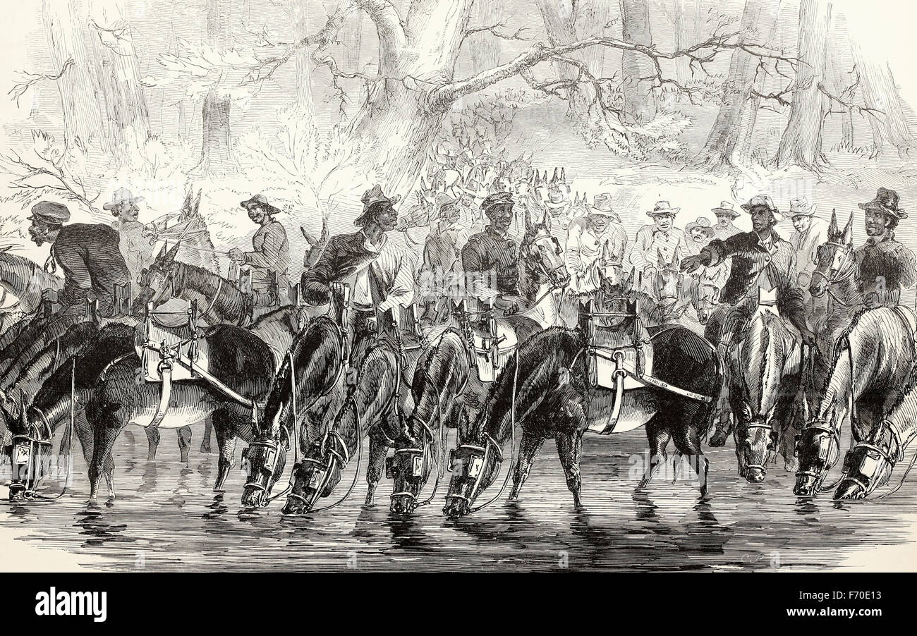Negro Drivers of the baggage train attached to General Pleasonton's Cavalry Brigade watering their mules in - Stock Image