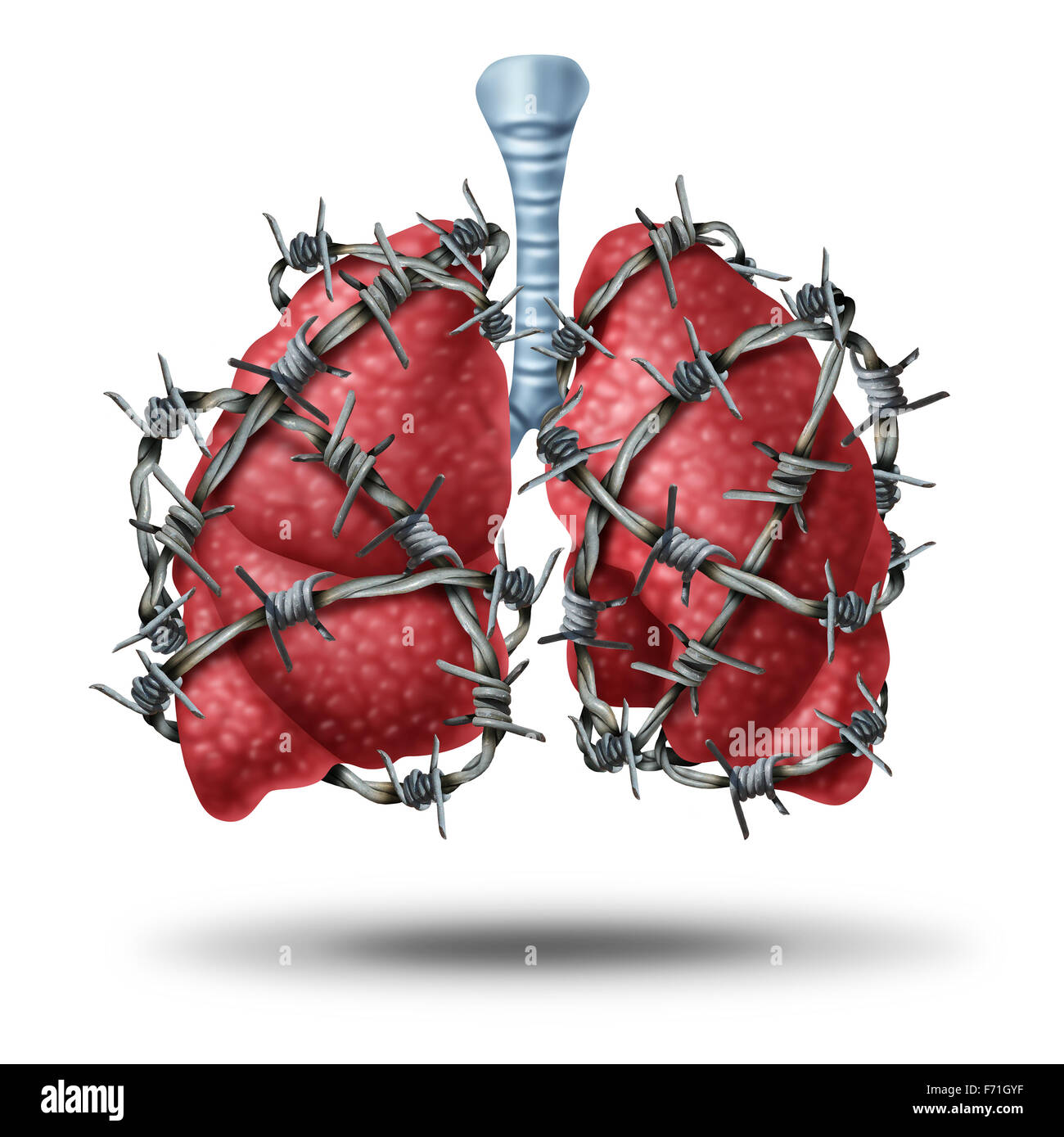 Lung pain medical concept as a pair of human lungs organ wrapped with dangerous barbed or barb wire as a health - Stock Image