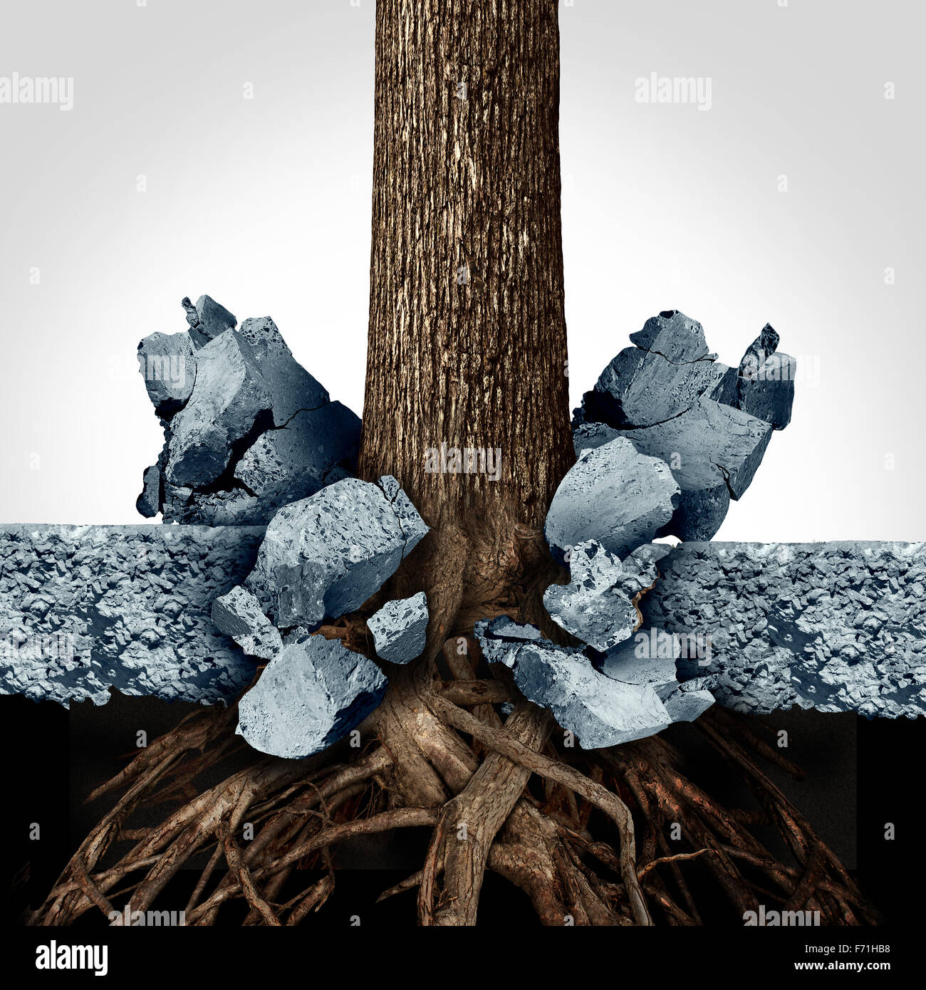 Power of determination through growth as a business concept with a tree and roots growing through a thick slab of - Stock Image