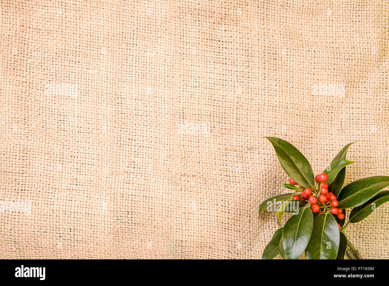 Sprig of Holly on a Hessian sack - Stock Image