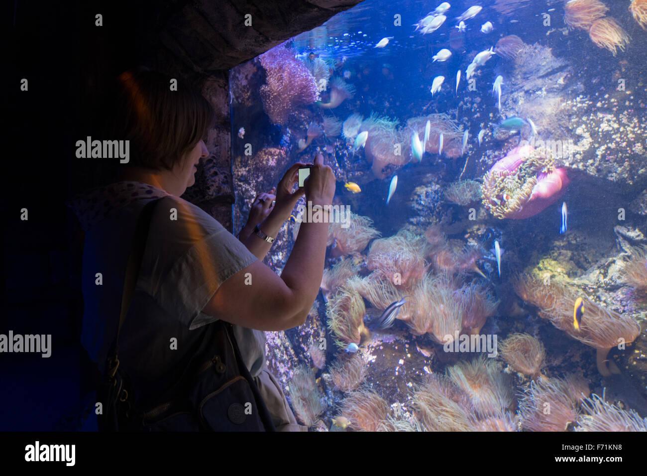 sea life sydney aquarium visitor - Stock Image