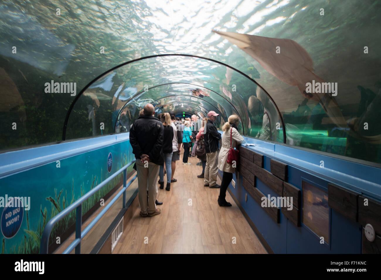 people inside sea life sydney aquarium - Stock Image