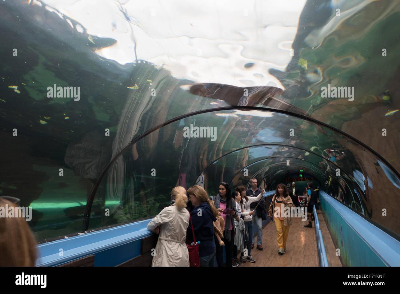 sea life sydney aquarium people - Stock Image