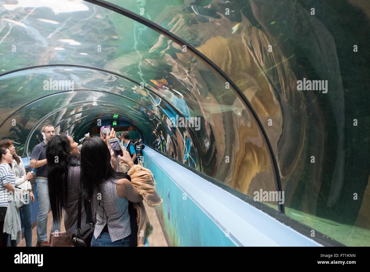 sea life sydney aquarium interior - Stock Image