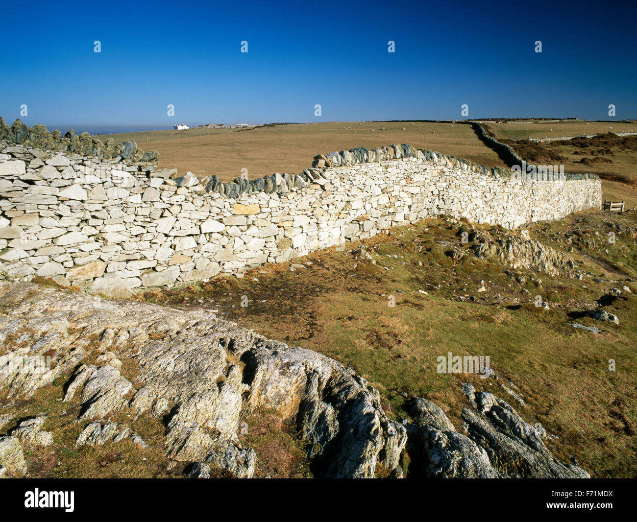 High drystone wall near the cliff edge at Rhoscolyn Head, Anglesey, North Wales, UK - Stock Image