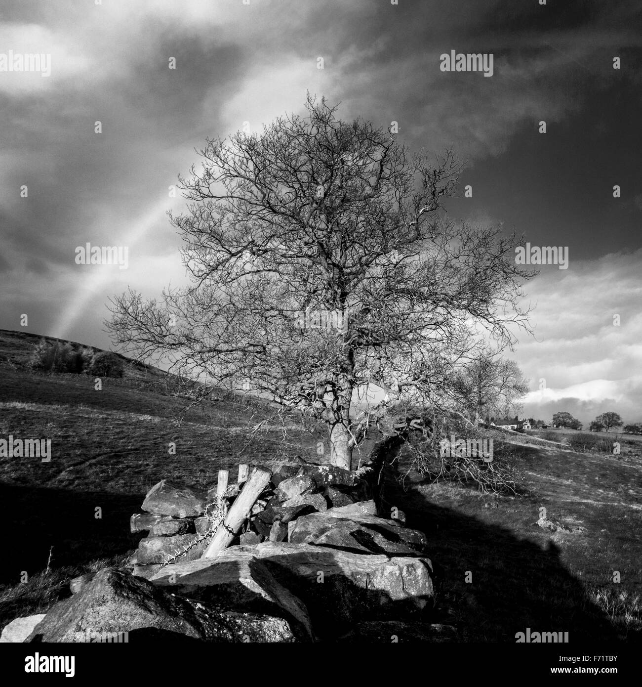 A monochrome rainbow framing a beautifully sunlit tree and stone wall in Yorkshire, England - Stock Image