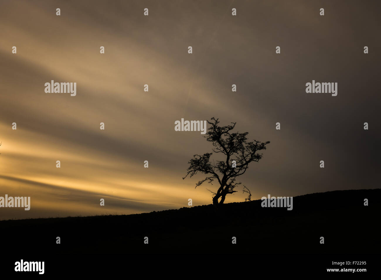 Single tree with a remarkable cloud formation behind - Stock Image