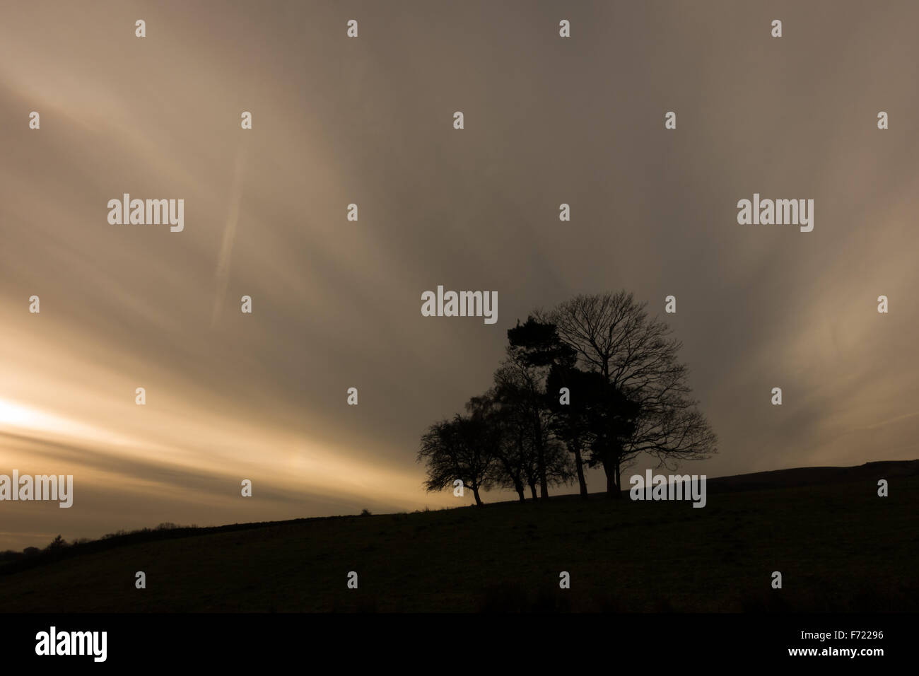 A small copse of trees with a remarkable cloud formation behind - Stock Image