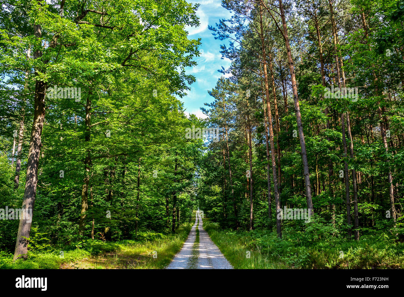 Path Canopy Stock Photos & Path Canopy Stock Images