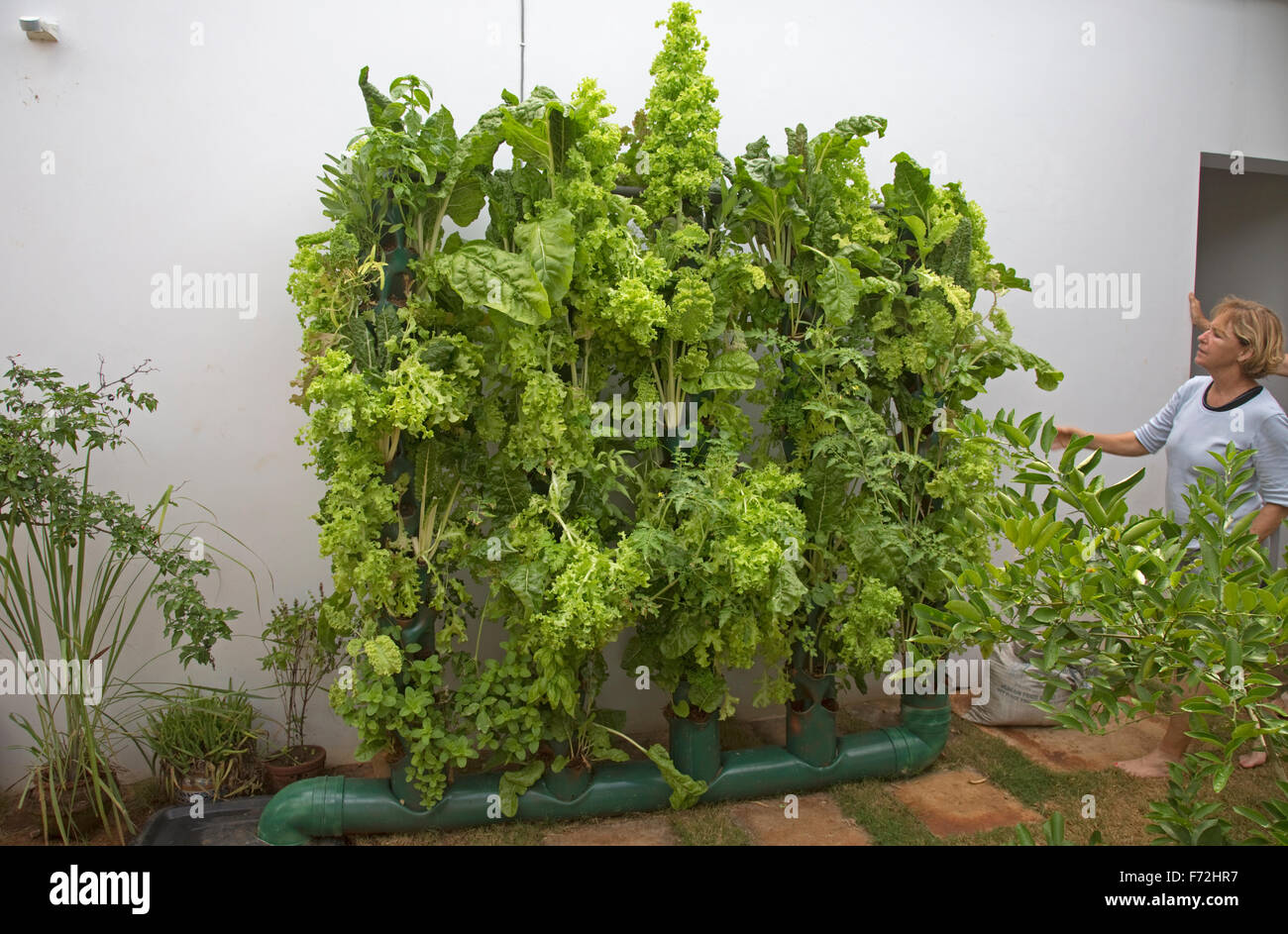Vertical Vegetable Gardening Using Home Made Aquaponics System Kenya Stock Photo Alamy