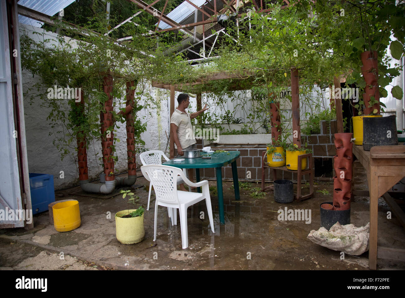 Sustainable self-sustaining vegetable growing involving a natural cycle with tilapia fish and chickens in confined - Stock Image