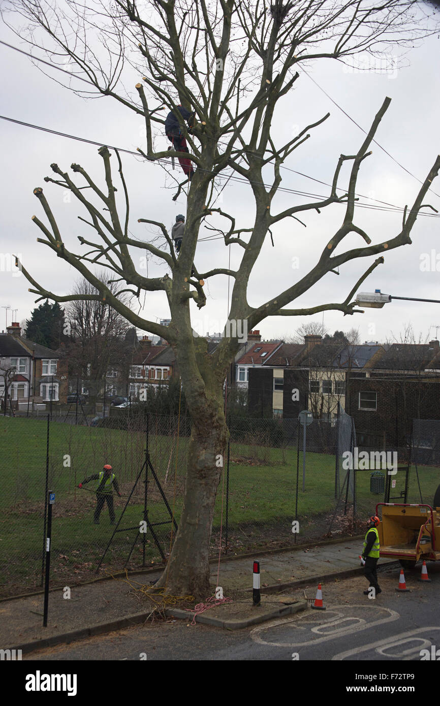 Tree surgeons working on tree by Greening Street Green, Abbey Wood, London, UK - Stock Image