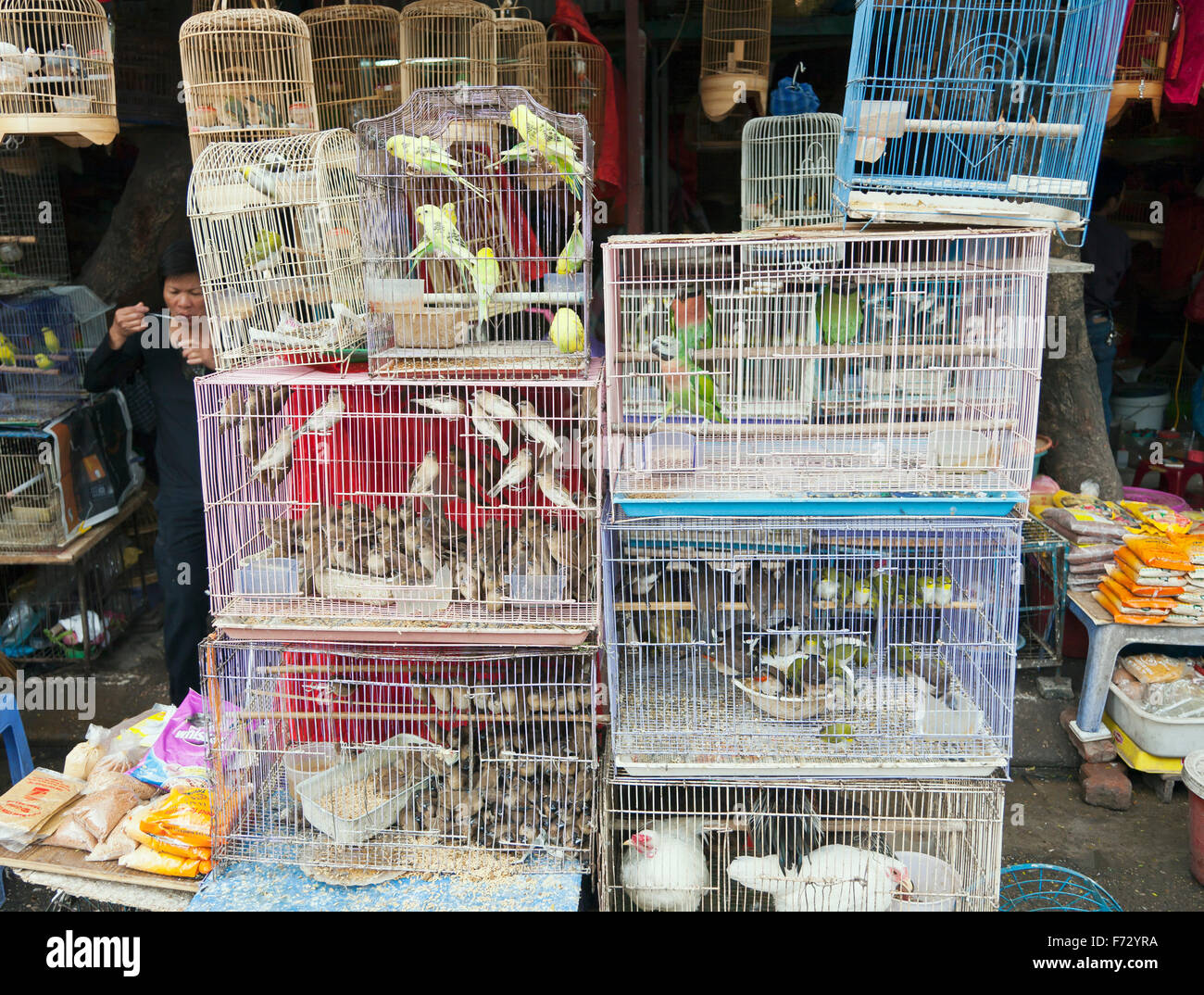 Birds for sale - Stock Image