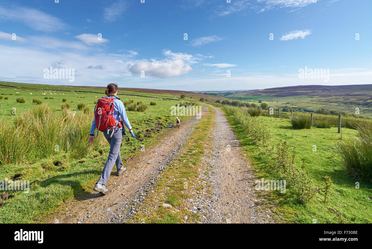 A hiker walking their dog at Edmundbyers Common  in County Durham English countryside. - Stock Image