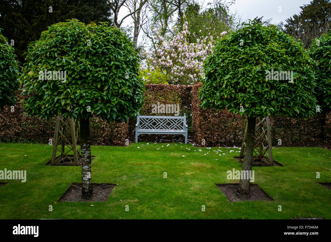 The Old Garden with clipped potuguese laurel trees. Wollerton Old Hall - Stock Image