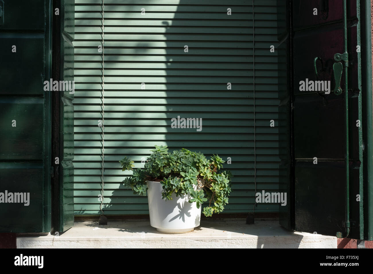 Potted plant on windowsill on The Island of Burano, Venice, Italy. - Stock Image