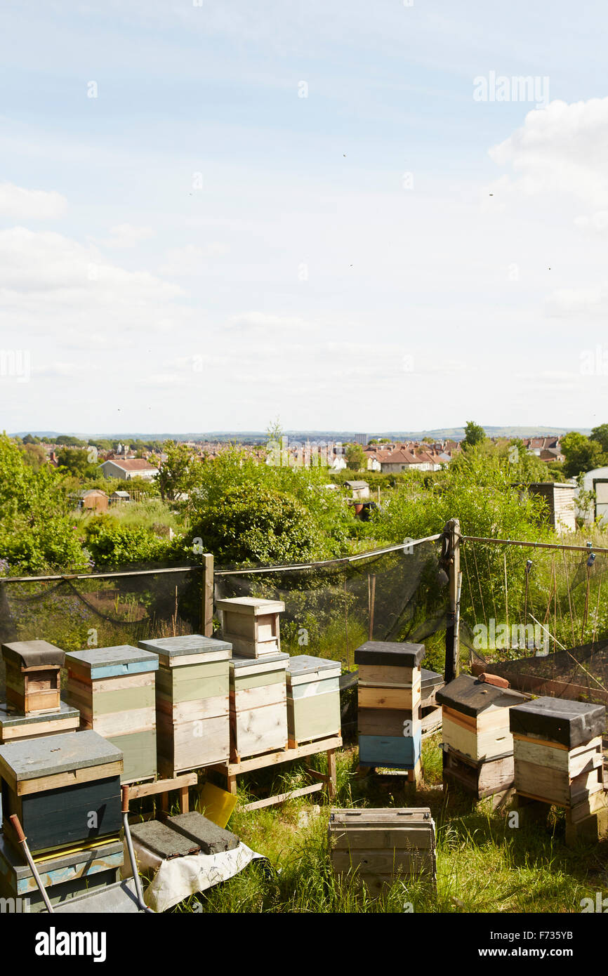 A collection of beehives in the corner of an allotment in a city. - Stock Image