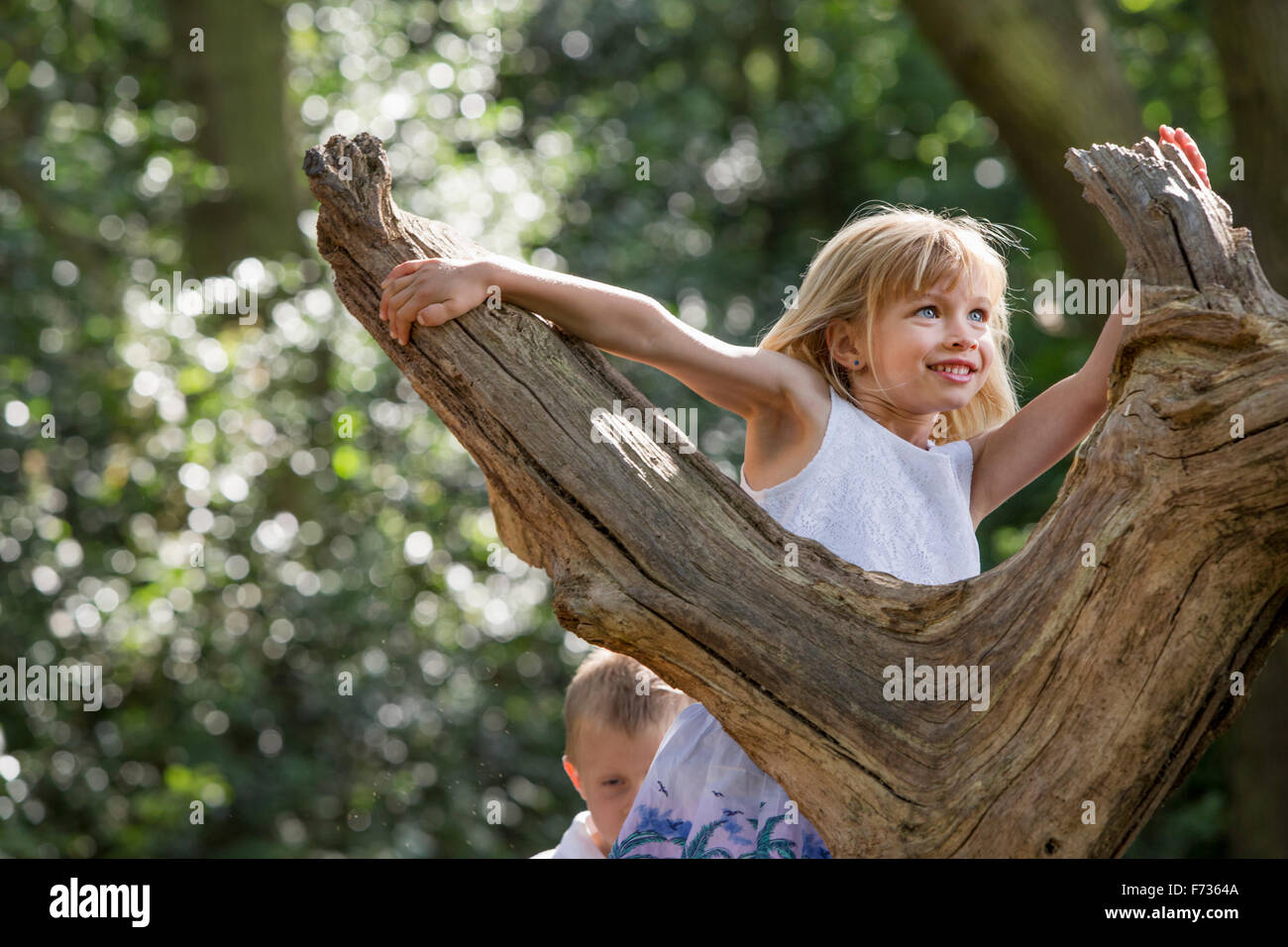 Young girl climbing a tree in a forest. - Stock Image