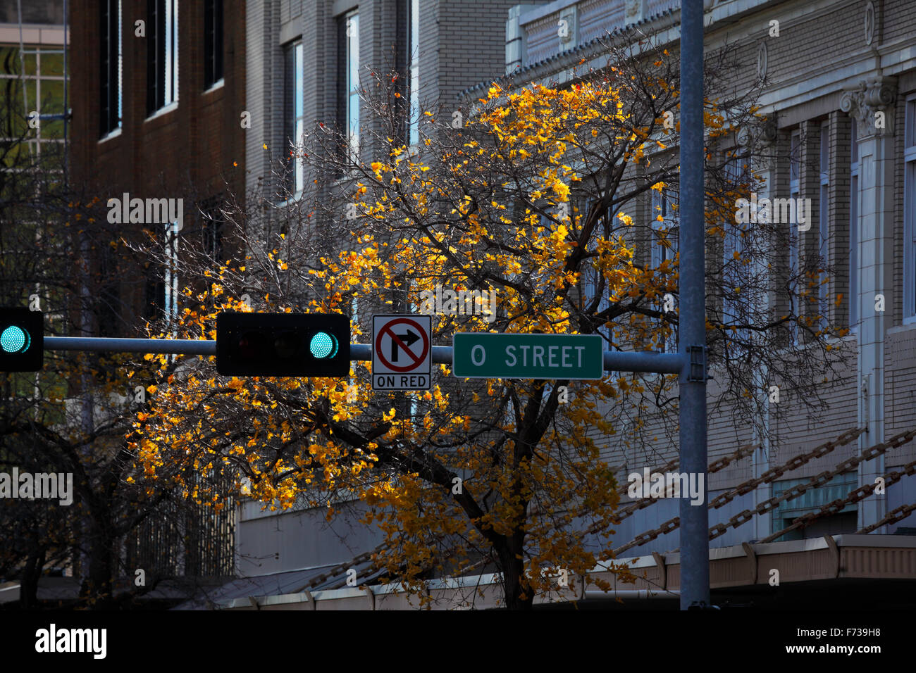 Yellow leaves on a tree behind a stoplight and sign. - Stock Image