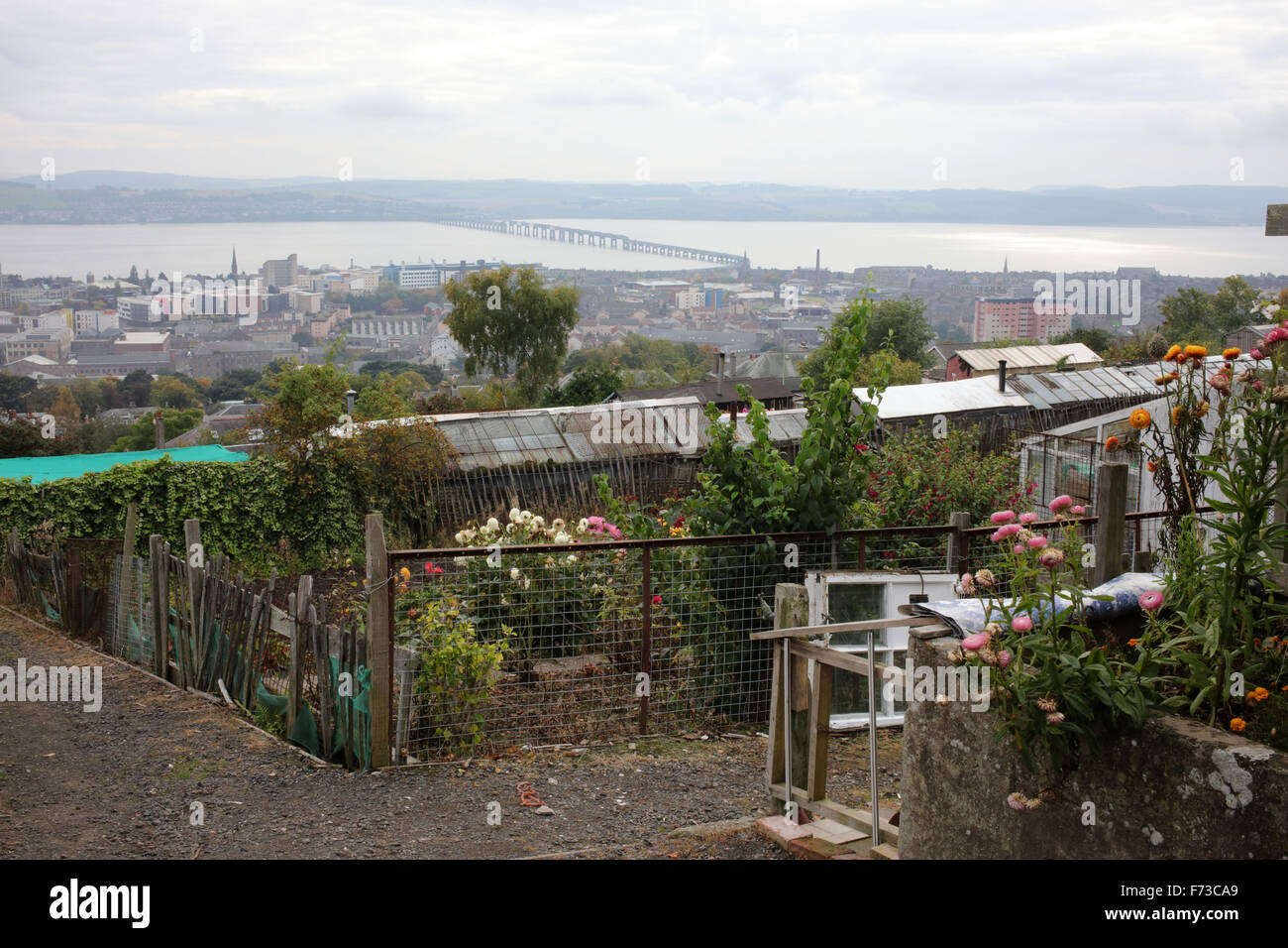 Allotments on the hill of Dundee Law with view on the city - Dundee city - Angus - Scotland - UK - Stock Image