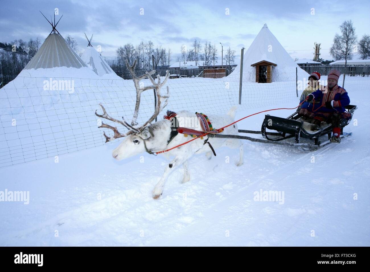 sleigh pulled by reindeer in a village Sami. Boazo Siida Sami camp. - Stock Image