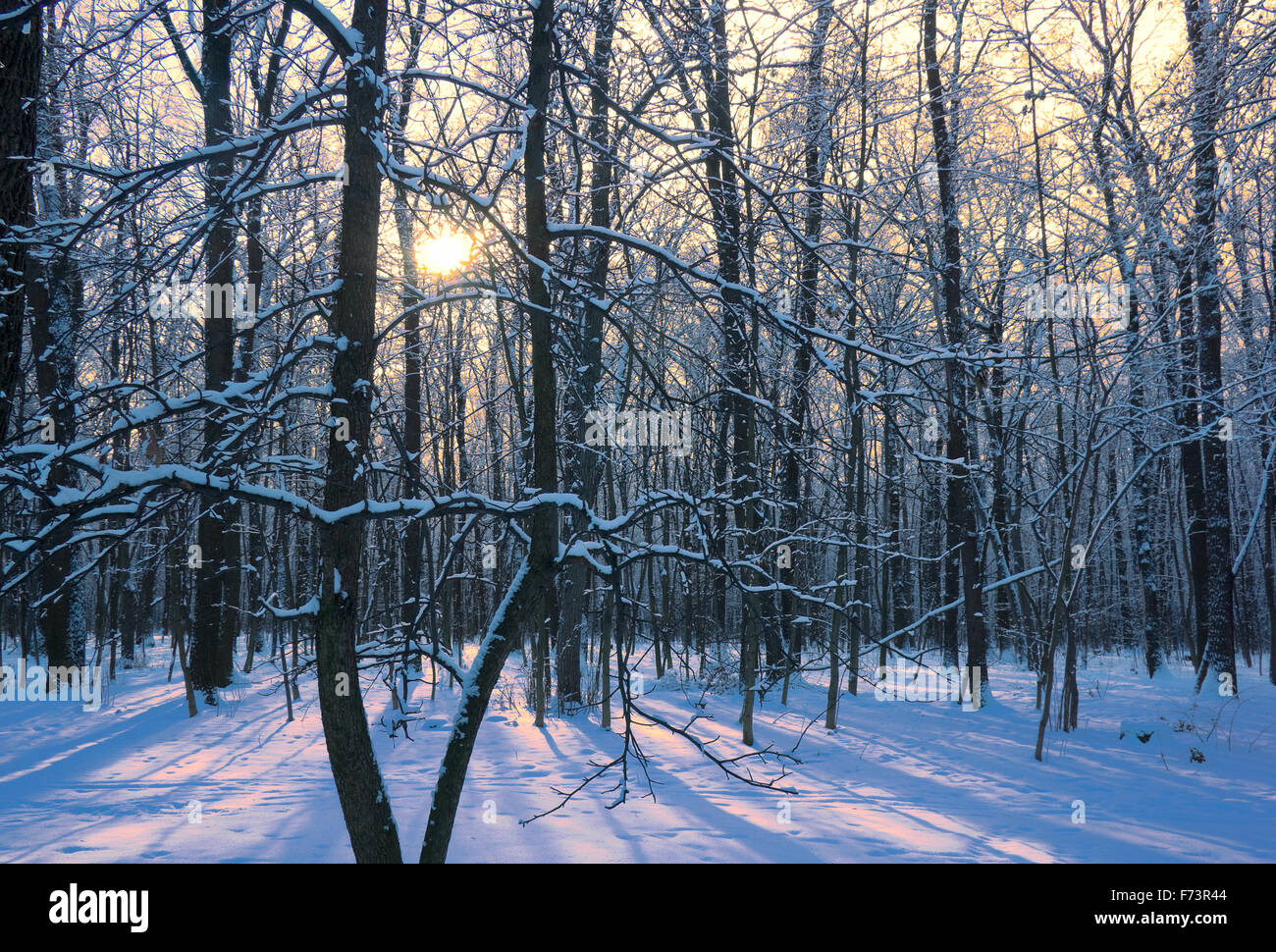 Trees under snow. Sunny day. Horizontal format, - Stock Image