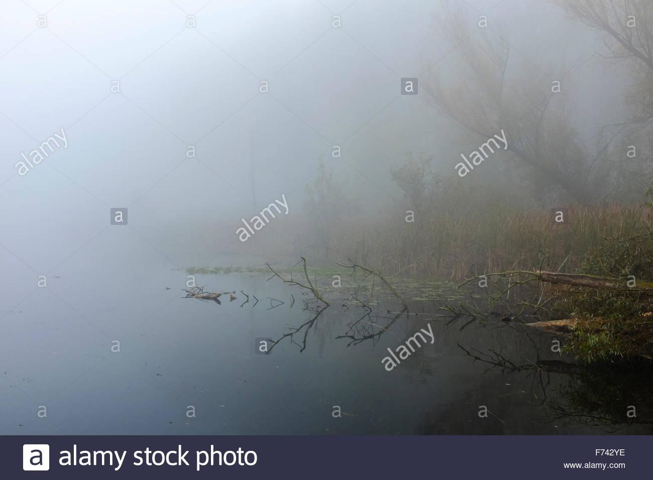 Foggy morning river reflexion. - Stock Image
