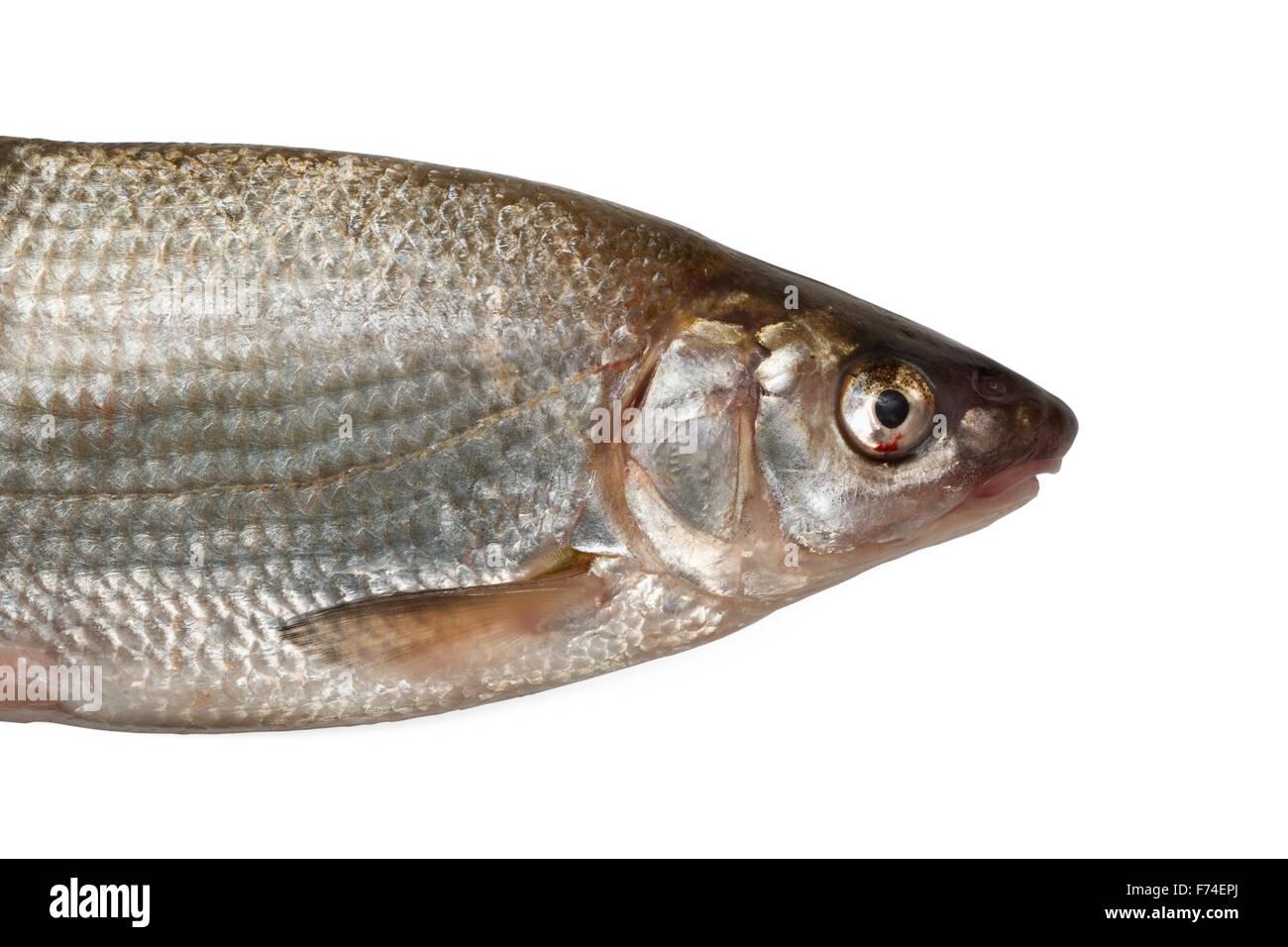 Nase fish Stock Photo
