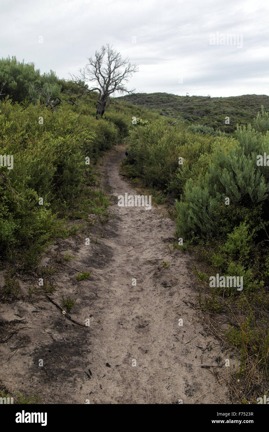 Hiking Trail on the Tounge Point Track in the Wilsons Promontory National Park, Victoria, Australia. Stock Photo
