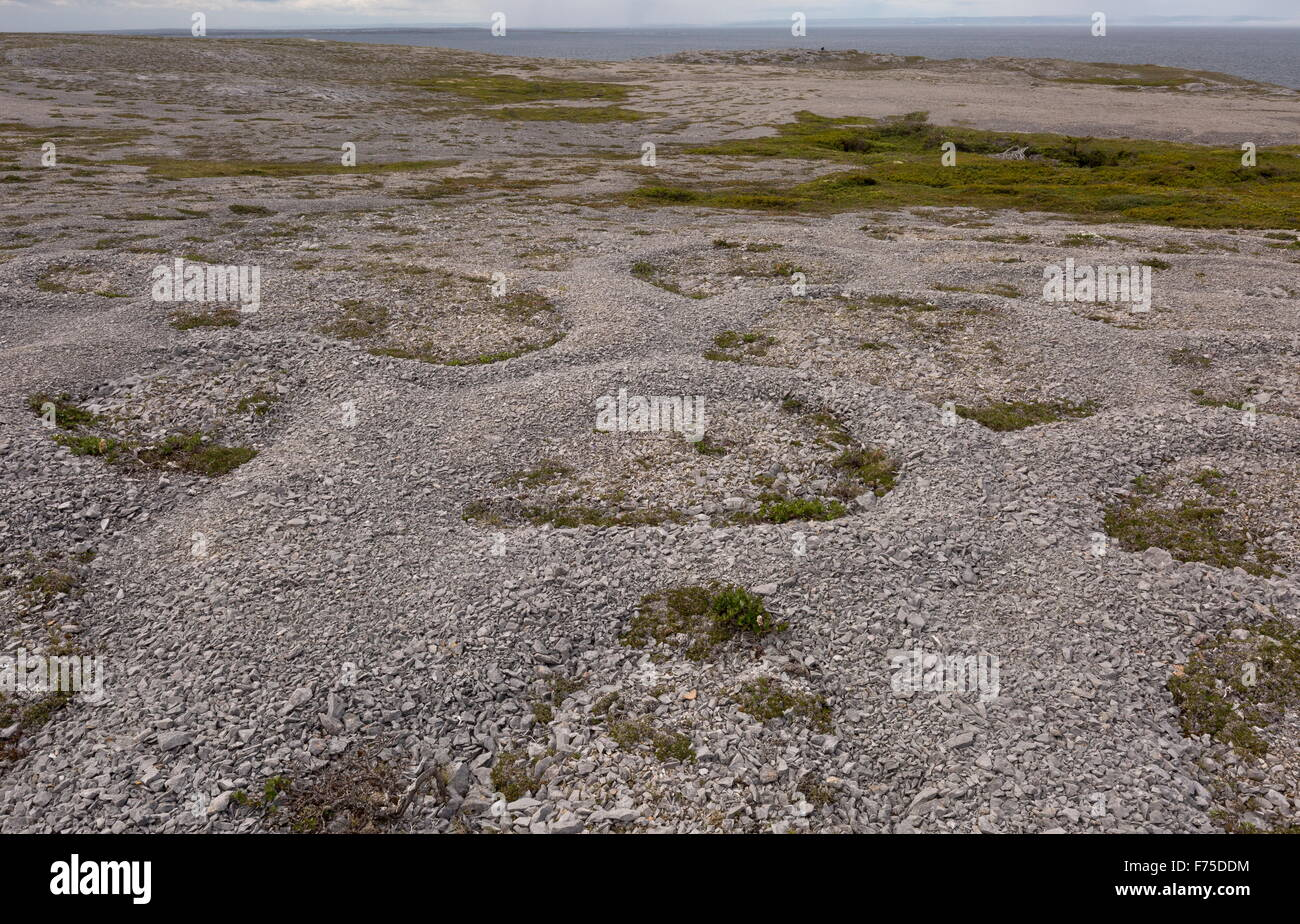 Frost polygons and other permafrost effects on the Ordovician limestone at Burnt Cape, north-west Newfoundland. - Stock Image